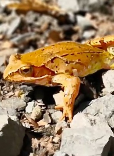 Лягушка пытается сбежать из пасти змеи: видео