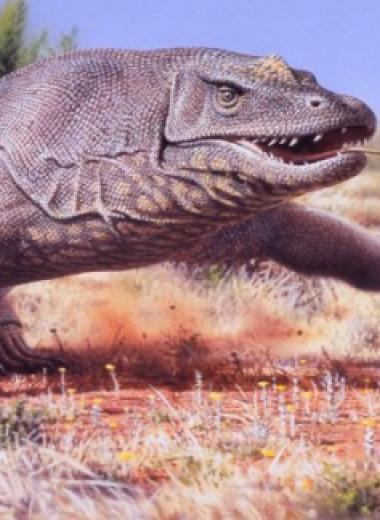 Мегафауна: 10 невероятных созданий доисторической Австралии