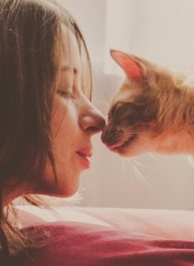 Животные испытывают те же типы привязанности, что и люди