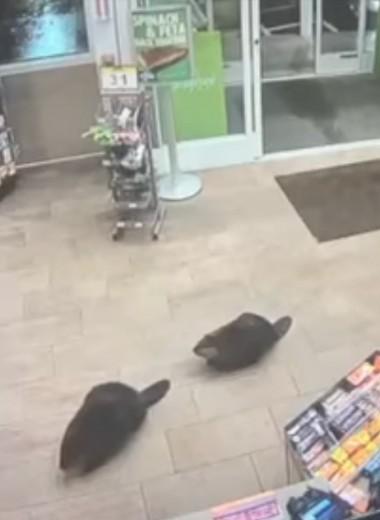 Как бобры в магазин ходили: видео