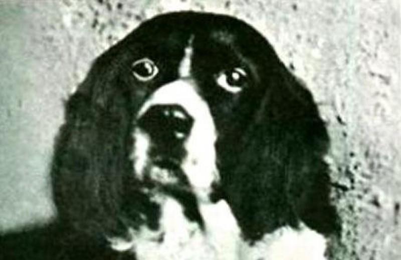 Джим – чудо-пес с необыкновенным даром предсказания
