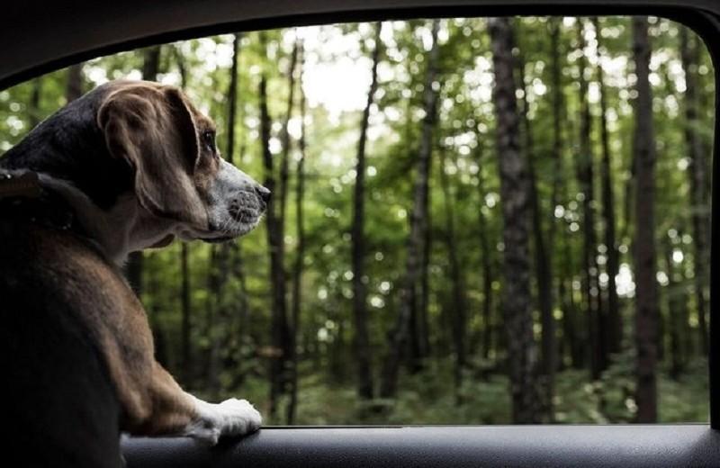 Как отправиться в путешествие с домашним животным: инструкция к применению