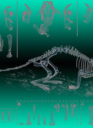 «Дружелюбная мышь» оказалась древнейшим социальным млекопитающим
