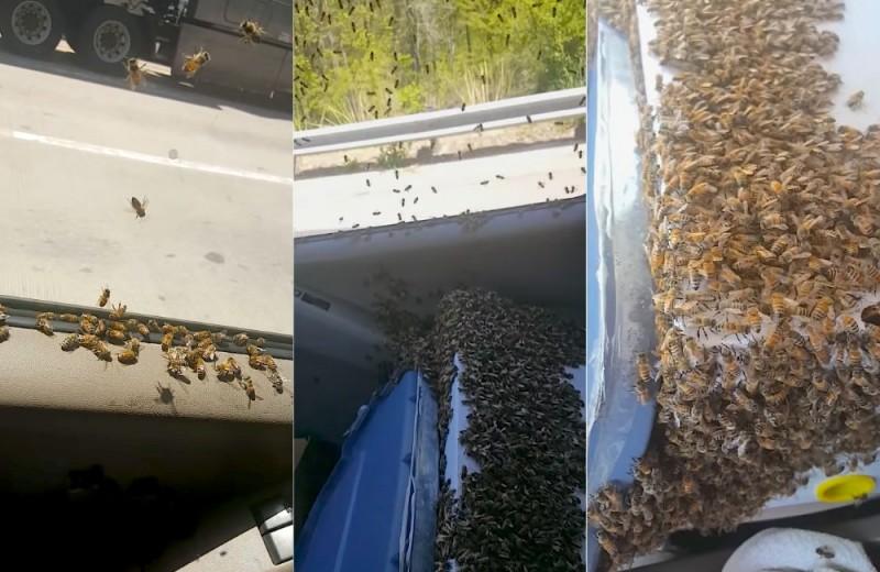 Пасечник проехал 65 километров с тысячами пчел в кабине: видео