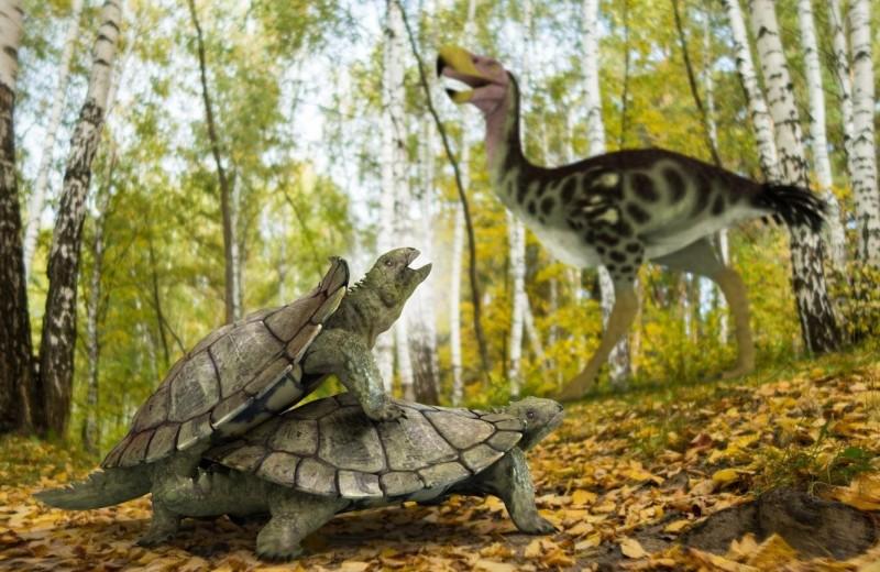 Найдены окаменелости черепахи, пережившей «великое массовое вымирание»