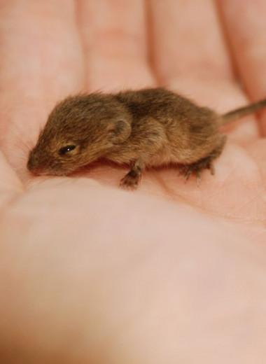 Как развивается эмбрион мыши: видео