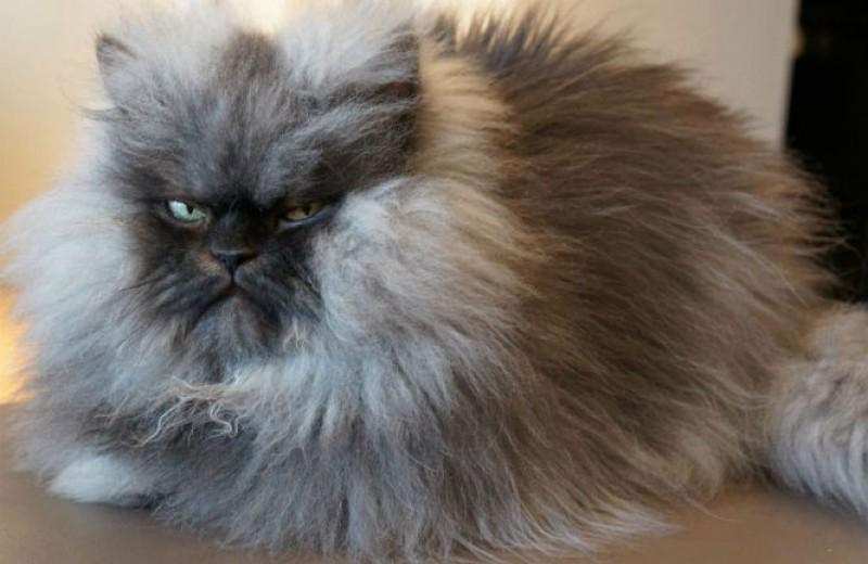 9 условий, которые нужно соблюдать, чтобы не раздражать своего кота