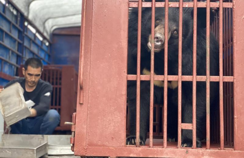 В Китае провели самую масштабную операцию по спасению медведей