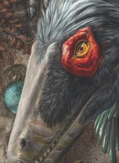 Чего мы не знали о динозаврах: большая инфографика
