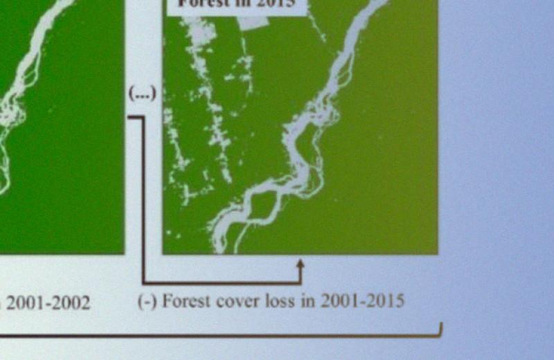 Опушки амазонских тропиков потеряли миллиард тонн углерода с начала XXI века