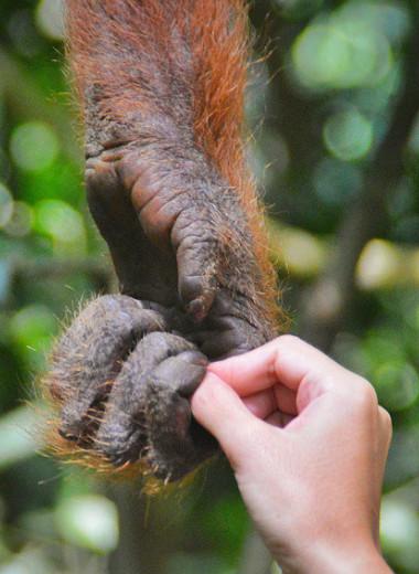 Неизбежное зло: могут ли быть научные опыты без привлечения животных