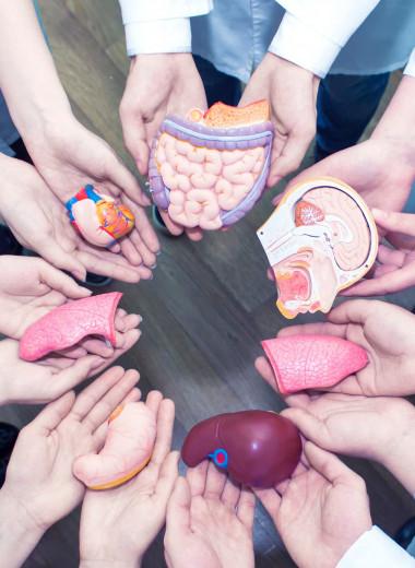Хранить не в холодильнике: как продлить жизнь органам вне тела