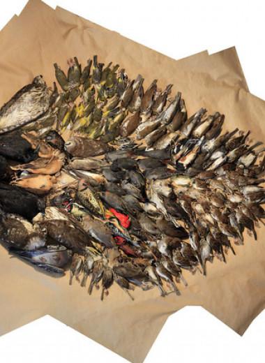 Выключение света по ночам назвали эффективным способом сократить гибель перелетных птиц