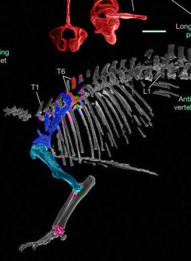 «Безумный зверь» с Мадагаскара поможет разобраться в эволюции на островах