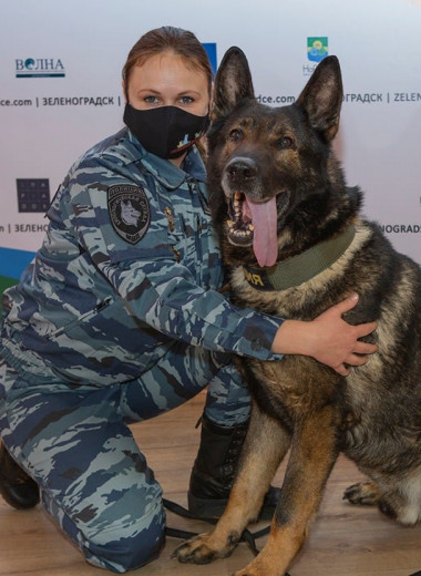 Пес из России получил итальянскую награду «собачьей верности». Он спас девочку от изнасилования