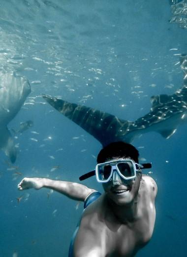 Дайверы против акул: каких пляжей стоит избегать и как победить хищника врукопашную