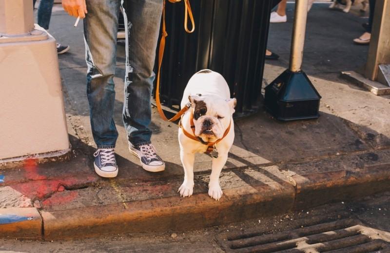 Меняется ли отношение к домашним животным в России? Самые яркие тенденции 2019 года