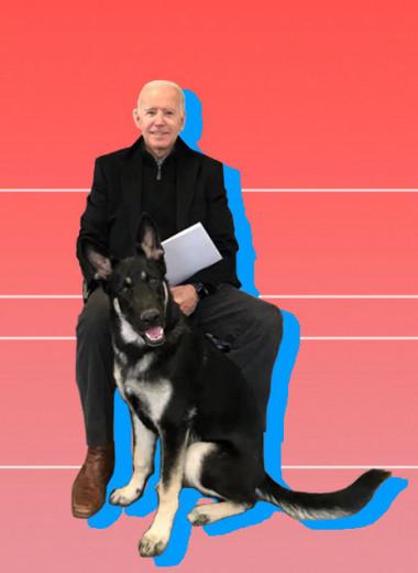 Мужчина и его собаки: Джо Байден и его немецкие овчарки Чемп и Мейджор