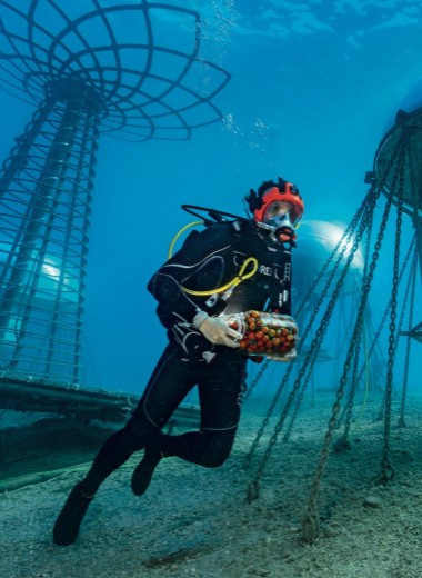 Поля морей: где будут выращивать еду будущего