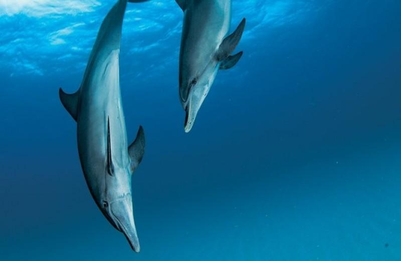 Дельфины – главные сексуальные гиганты Мирового океана