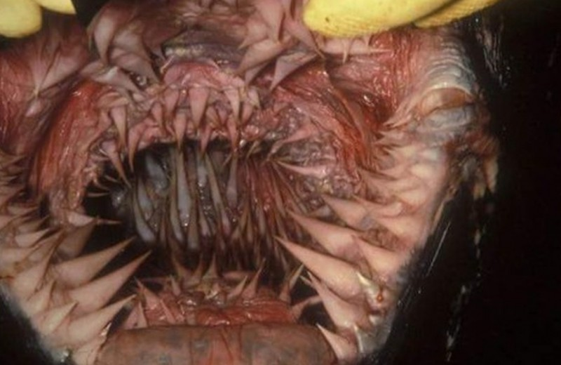 5 животных с самыми необычными зубами