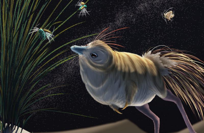 Строение глаз и внутреннего уха выдало в динозаврах-муравьедах ночных охотников