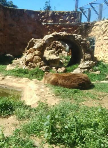 Брошенные звери в закрытом испанском зоопарке: что с ними будет