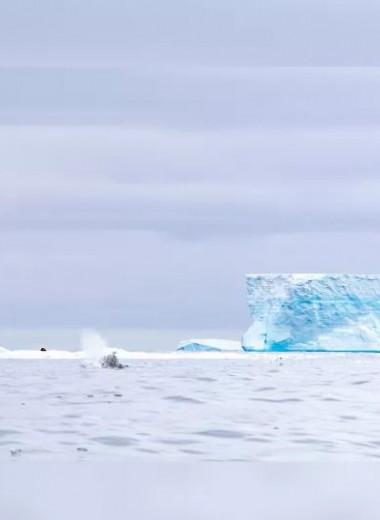 Айсберг, движущийся к Южной Георгии, опять раскололся. В этот раз уже на 4 части