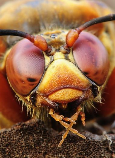 Кто такие охотники за цикадами и почему они заселили США