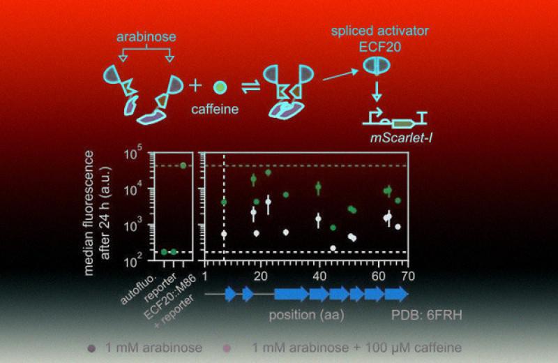 Транспозоны помогли найти оптимальные участки для разрезания белков
