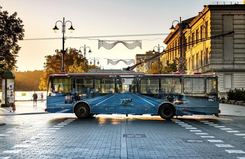 8 неожиданных фактов о самом рогатом виде транспорта