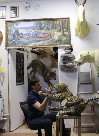 Бизнес на создании чучел животных: монолог таксидермиста о заработке и тонкостях работы