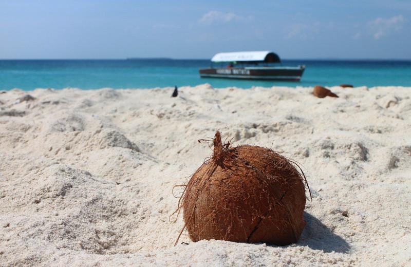 Апельсины, кокосы и дождевая вода: диета двух современных Робинзонов