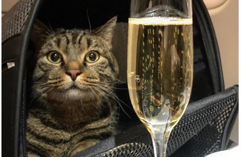 Ответный удар кота Виктора: скандал вокруг «Аэрофлота» превзошел по силе кампанию про «иглу мужского одобрения»