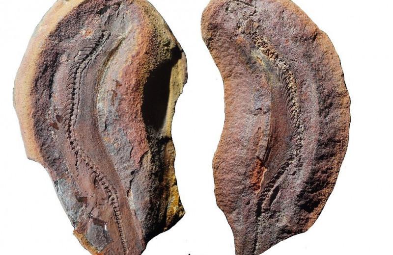 Окаменелость из США рассказала об образе жизни крошечных микрозавров
