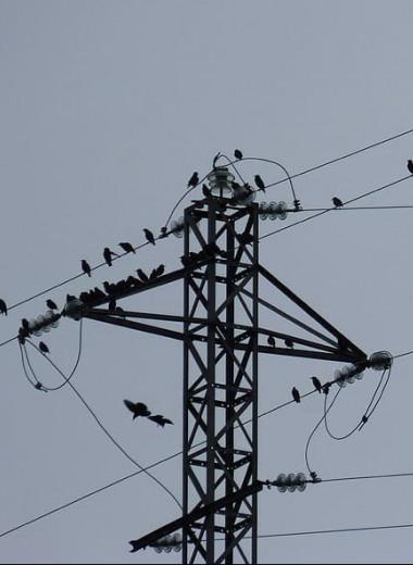 Испанскому энергетическому гиганту предъявили иск за гибель сотен птиц