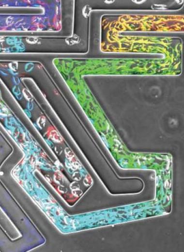 Слизевики и опухолевые клетки нашли выход из сложного лабиринта