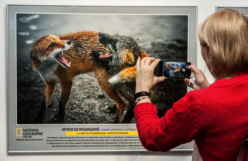 «Превзошли все ожидания». Фотовыставка «Дикая природа России 2018» открылась в Санкт-Петербурге