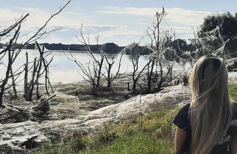 Нашествие пауков в Австралии: фото и видео