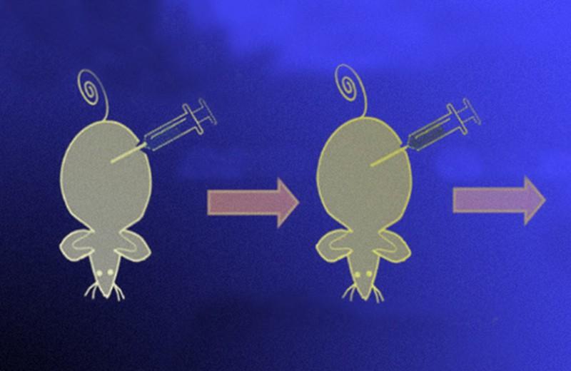 Принимаемый орально препарат помешал раковым клеткам завербовать макрофаги