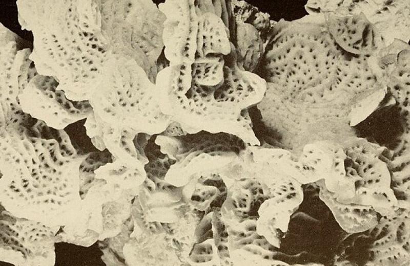Близость города помогла кораллам атолла Тарава пережить потепление воды и нашествие морских звезд
