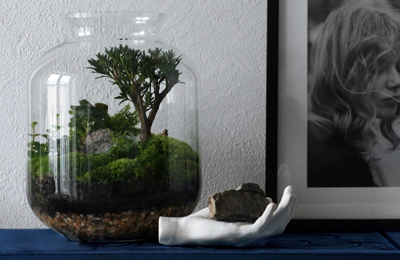 Как выращивать растения в квартире: 12 правил домашнего сада