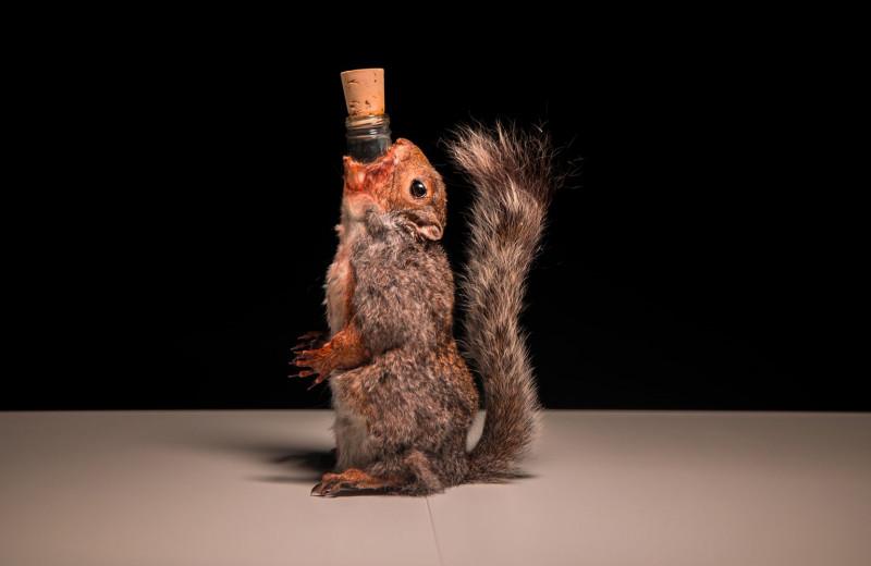 Пиво в белке и джин на муравьях: музей самой мерзкой еды пополнил свою коллекцию напитками