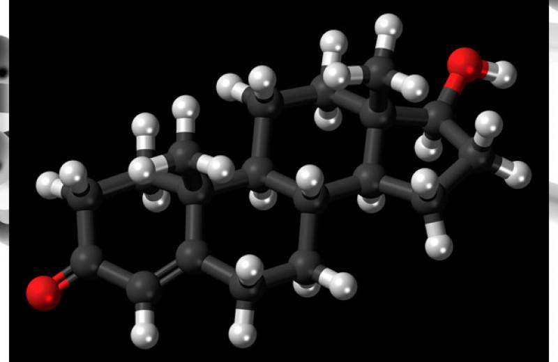 Перинатальные андрогены спасли самцов мышей от аллергии