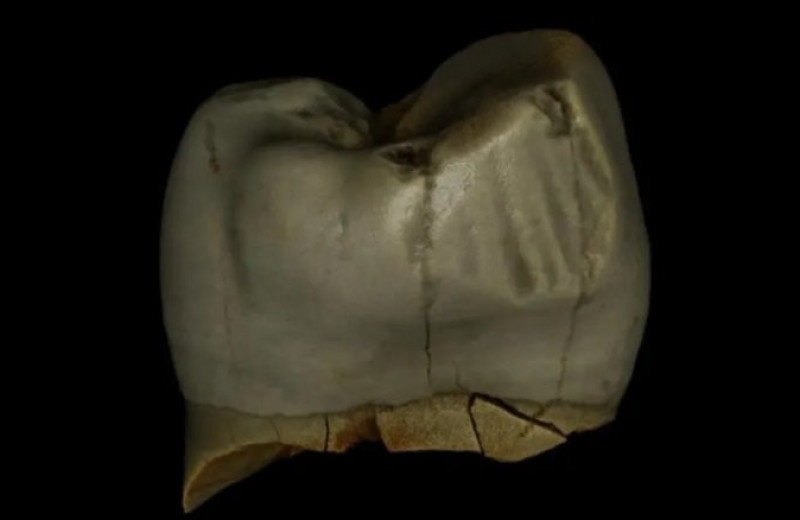 Неандертальцев заподозрили в уходе за полостью рта