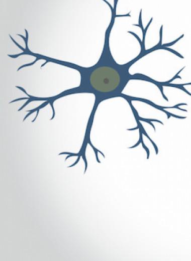 Микроглия разрушила тормозные синапсы развивающегося мозга мышей