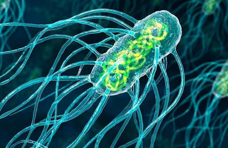 Нанодвигатель: как работает мотор, созданный бактериями