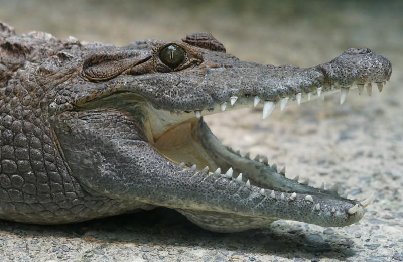 Как спастись из пасти крокодила: опыт морского биолога