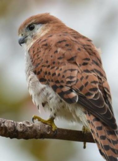 Охрана существующих заповедников поможет хищным птицам лучше создания новых