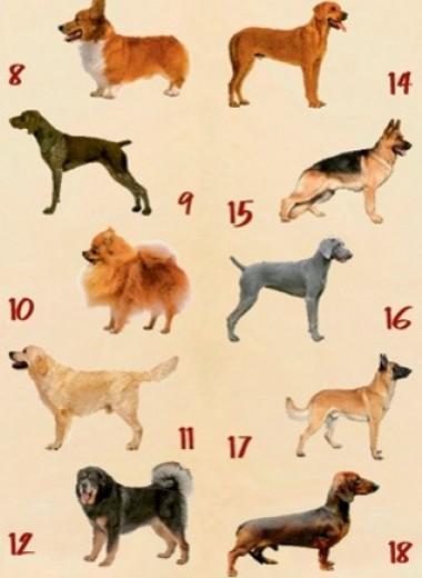 Как превратить обычную собаку в личного фитнес-инструктора
